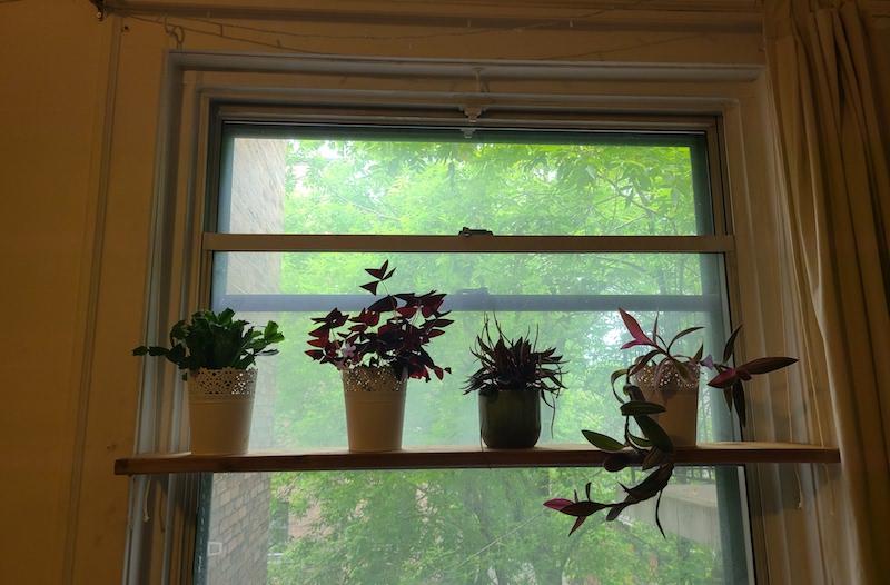 finished plant shelf