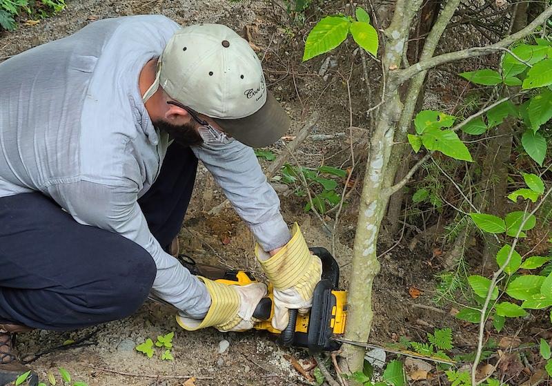 cutting sapling