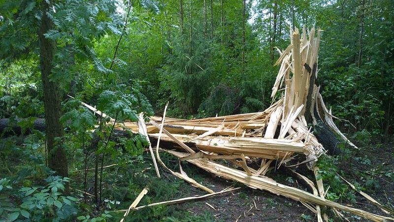 tree after lightning strike